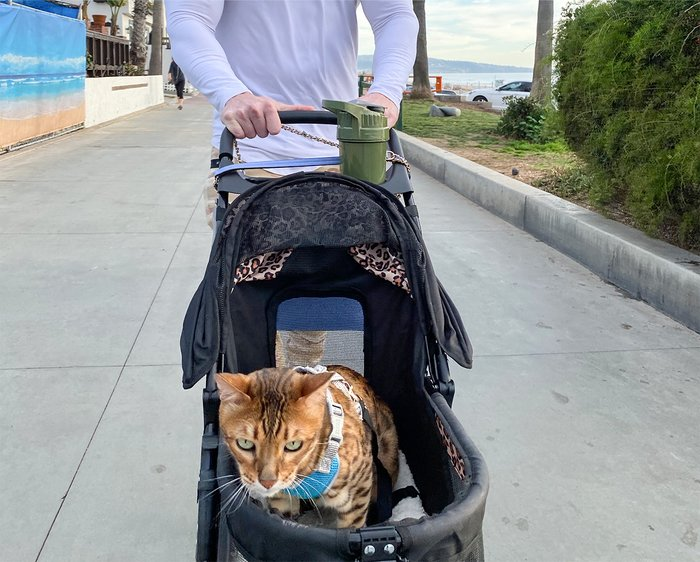 Going for a walk with the cats.